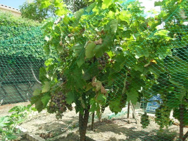 nouvelles plantations de légumes - Page 4 Sdc11317