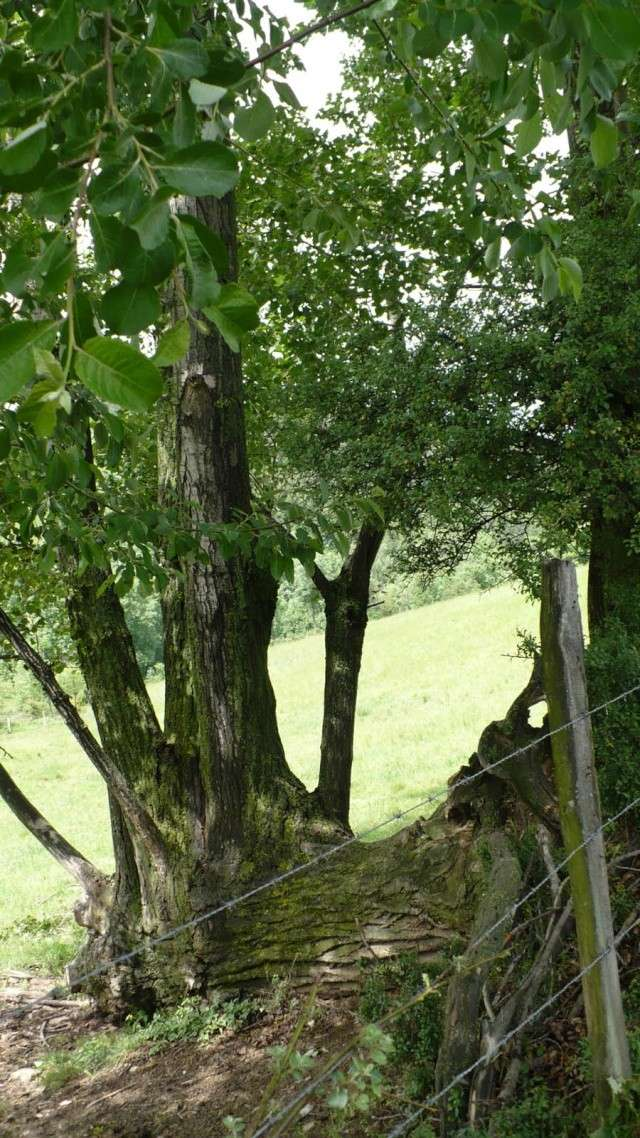 arbre mystère P1000714