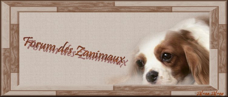Zanimaux Logo1010