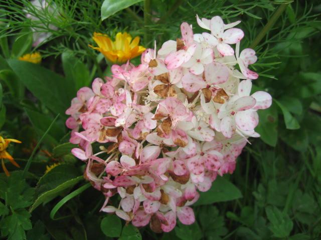 tous sorte de fleures 01_3710