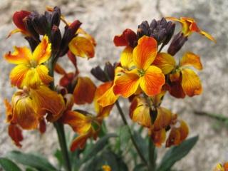 fleurs de marc et mario Img_0128