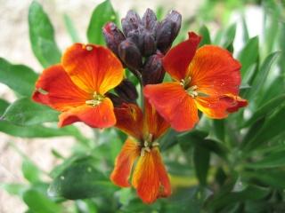 fleurs de marc et mario Img_0129