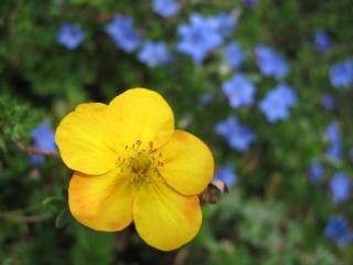 fleurs de marc et mario Img_0131