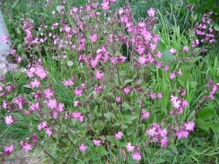 fleurs de marc et mario Img_0132