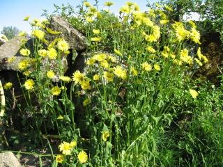 fleurs de marc et mario Img_0133