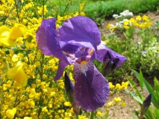 fleurs de marc et mario Img_0135