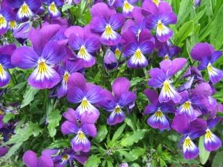 fleurs de marc et mario Img_0137