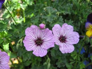 fleurs de marc et mario Img_0138