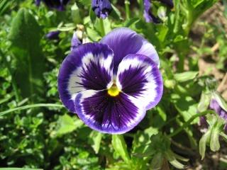 fleurs de marc et mario Img_0139