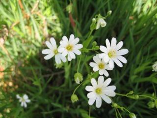 fleurs de marc et mario Img_0140