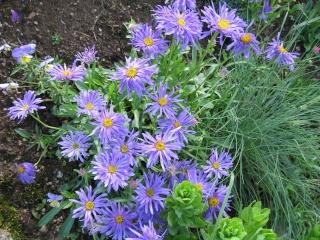 fleurs de marc et mario - Page 2 Img_0157