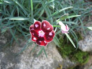 fleurs de marc et mario - Page 2 Img_0158