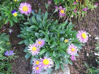 fleurs de marc et mario - Page 2 Img_0162