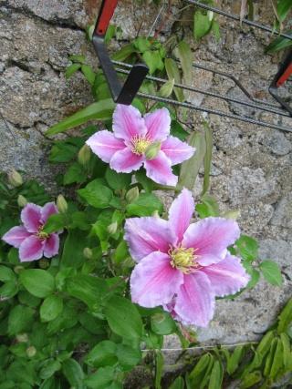 fleurs de marc et mario - Page 2 Img_0176