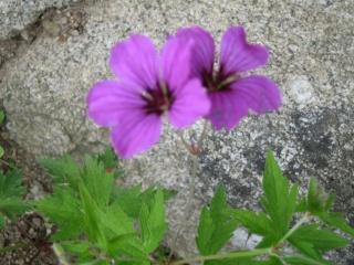 fleurs de marc et mario - Page 3 Img_0198