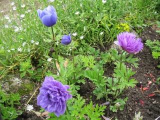 fleurs de marc et mario - Page 5 Img_0258