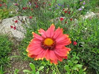 fleurs de marc et mario - Page 5 Img_0259