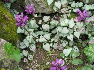 fleurs de marc et mario - Page 5 Img_0260