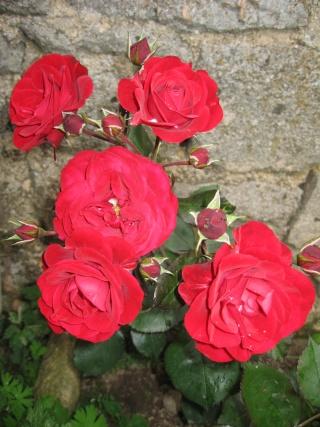 fleurs de marc et mario - Page 5 Img_0272