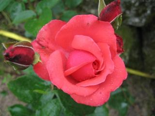 fleurs de marc et mario - Page 5 Img_0273