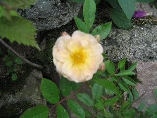 fleurs de marc et mario - Page 5 Img_0274