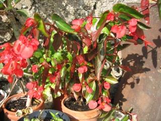 fleurs de marc et mario - Page 6 Img_0293