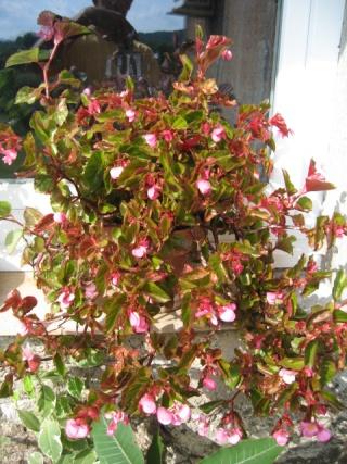 fleurs de marc et mario - Page 6 Img_0295