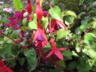 fleurs de marc et mario - Page 6 Img_0298