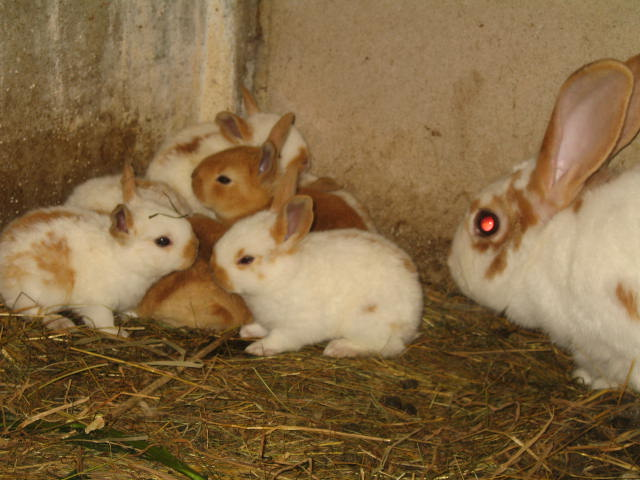 enfin des petit lapins je désèspèrais lol Img_0319