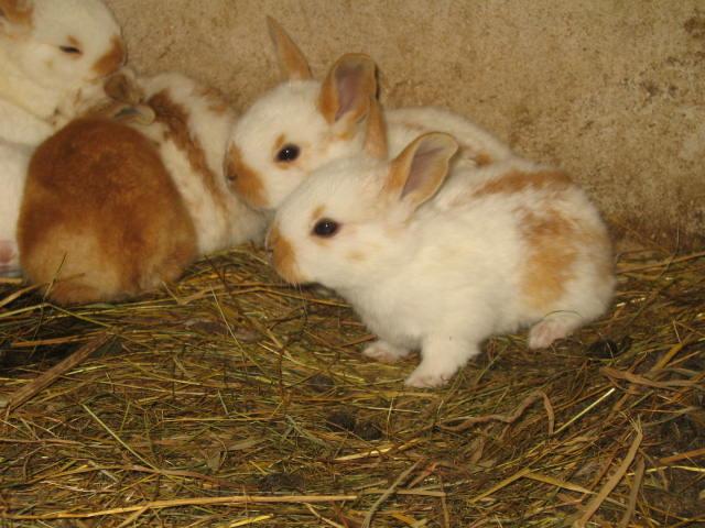 enfin des petit lapins je désèspèrais lol Img_0320