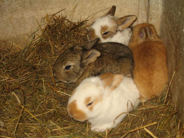 enfin des petit lapins je désèspèrais lol Img_0321