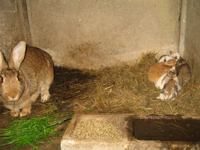 enfin des petit lapins je désèspèrais lol Img_0322