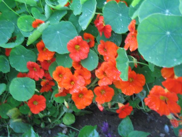 tous sorte de fleures - Page 2 Img_0345