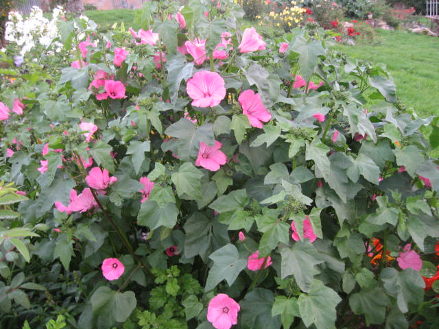 tous sorte de fleures Img_0347