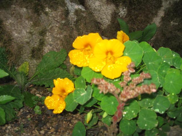 tous sorte de fleures - Page 2 Img_0348