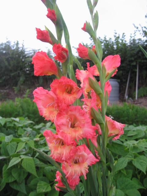 tous sorte de fleures Img_0350