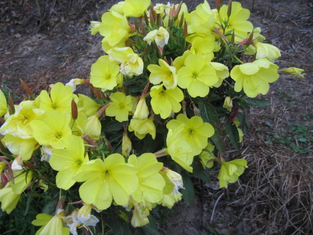 tous sorte de fleures Img_0351
