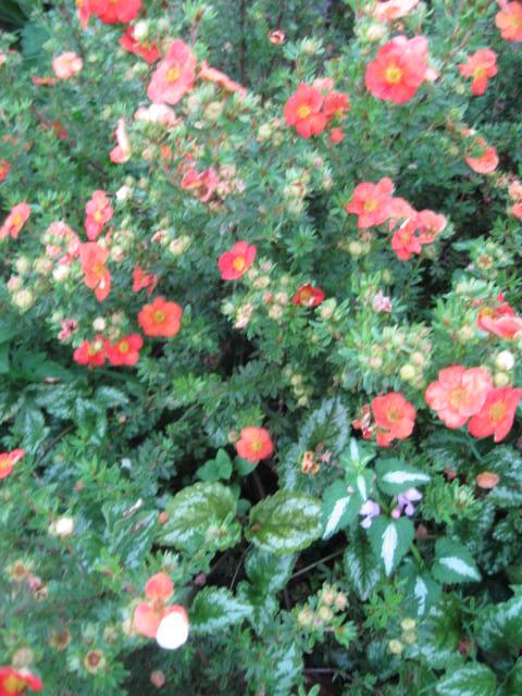 tous sorte de fleures - Page 2 Img_0353