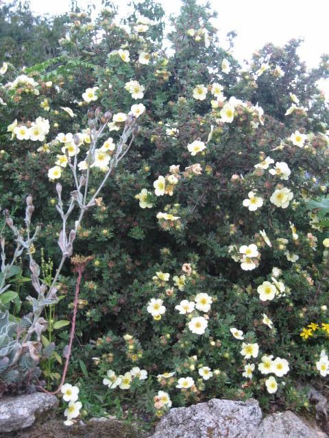 tous sorte de fleures Img_0354
