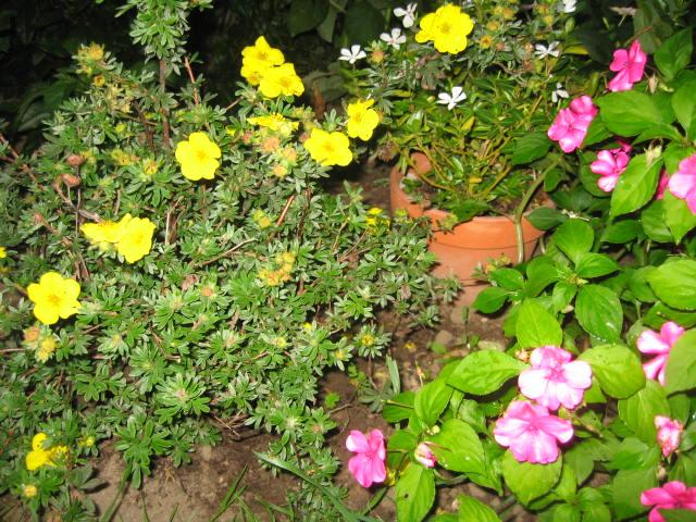 tous sorte de fleures - Page 2 Img_0355