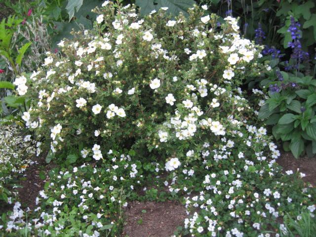 tous sorte de fleures Img_0356