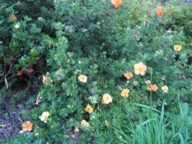 tous sorte de fleures - Page 2 Img_0357