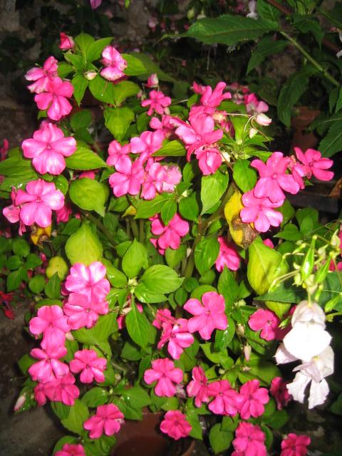 tous sorte de fleures Img_0360