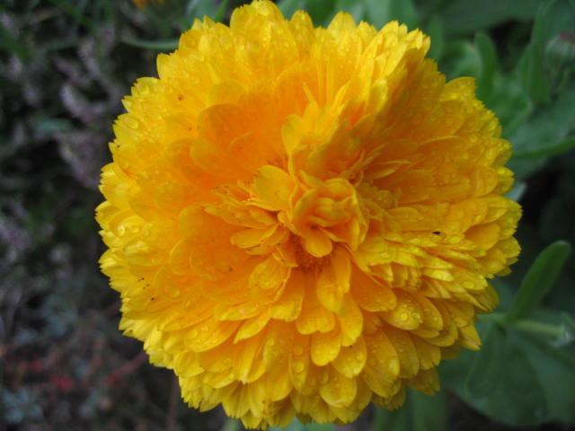 tous sorte de fleures Img_0361