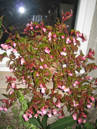 fleurs de marc et mario - Page 6 Img_0410