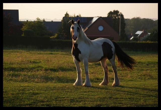 Pleins de nouvelles de mes chevaux, que de changements Chevau17