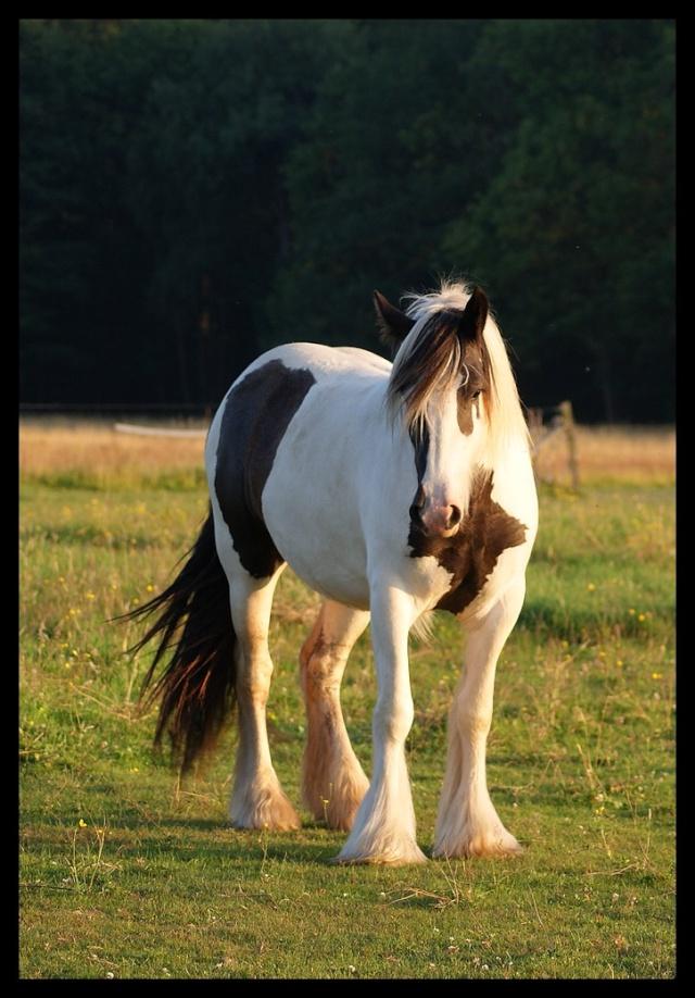 Pleins de nouvelles de mes chevaux, que de changements Chevau18