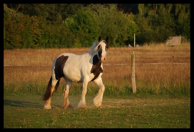 Pleins de nouvelles de mes chevaux, que de changements Chevau19