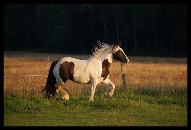 Pleins de nouvelles de mes chevaux, que de changements Chevau20