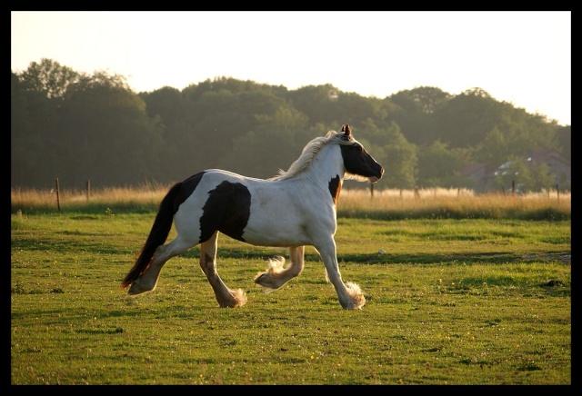 Pleins de nouvelles de mes chevaux, que de changements Chevau21